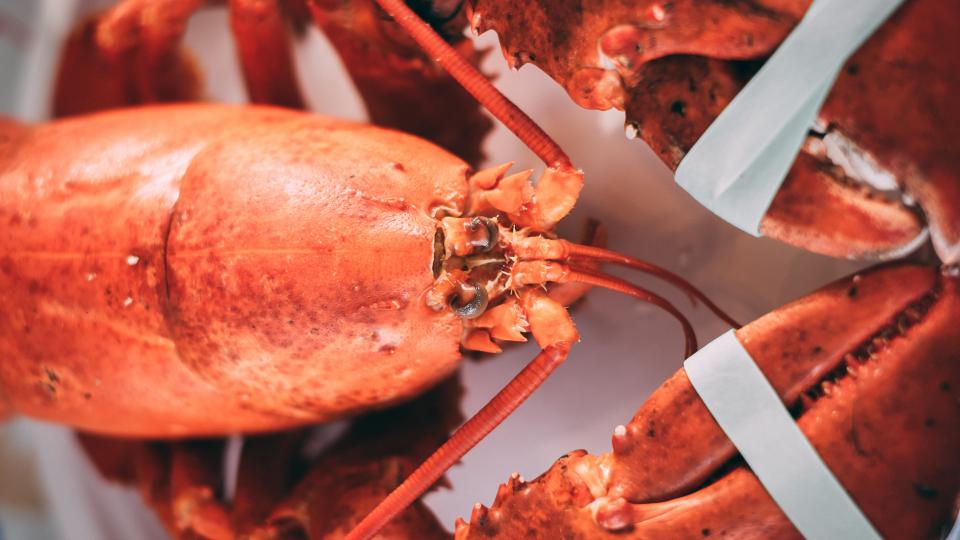 le-homard